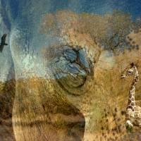 Preservation Art Prints & Posters by Vicki Pelham