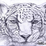 """Snow Leopard"" by DanaHaynes"