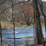 """""""Spring bloom on the Bushkill Creek"""" by campsanity"""
