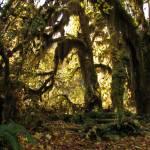 """""""Fall Rainforest"""" by jgummerman"""
