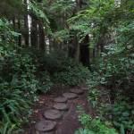 """Path Through The Woods"" by jgummerman"