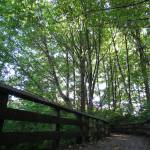 """Forested Walk (2)"" by jgummerman"