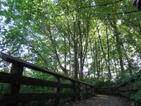 Forested Walk (2)
