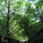"""Forested Walk"" by jgummerman"