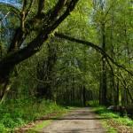 """Scenic Walkway"" by jgummerman"