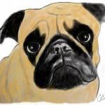 """""""Pug"""" by gooberella"""