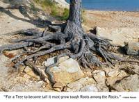 Roots Among The Rocks Photo by Ginette