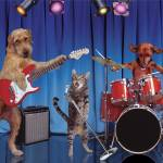"""Cats And Dogs In A Band"" by johnlund"