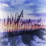 """Sea Oats 4"" by SkipNall"