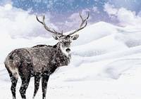 Stag During a Winter Christmas