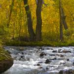 """McGee  Creek 2"" by jebrunner58"