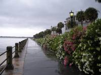 Rain-Kissed Charleston