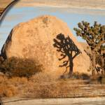 """JOSHUA TREE SHADOW"" by sandytravel"