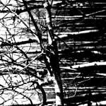 """The Aspen Grove    1243-8"" by BarbaraLin"