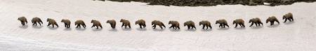 Grizzly Bear Action Panorama 2