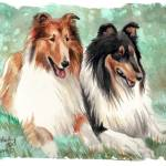 """""""Collies"""" by foxbrush"""