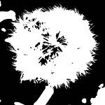 """dandelion"" by samos"