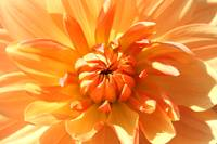 Orange Flower Power