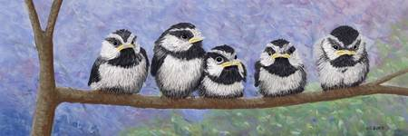 Chickadee Chicks