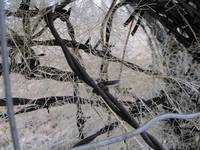 Frosted Barbwire