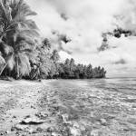 """""""Palm Cove"""" by SkipNall"""