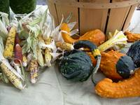 Fall Gourds 894