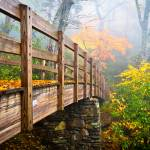 """Tanawha Trail Foot Bridge - Rough Ridge Autumn Fol"" by DAPhoto"