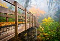 Tanawha Trail Foot Bridge - Rough Ridge Autumn Fol