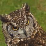 """""""Owl"""" by marktranchant"""