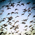 """""""Harbor Flock"""" by PadgettGallery"""