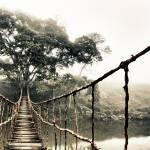 """Jungle Journey 7"" by SkipNall"