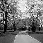 """Walk in the Park BW"" by CompassRosePhotography"