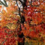 """""""Fall Tree"""" by MNTPhoto"""