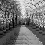 """Rosenstein Park - Depth BW"" by CompassRosePhotography"