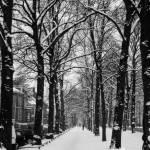 """""""Snowy Treed Pathway"""" by cybergypsie"""