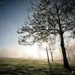 """""""Summer Mist"""" by groenhoender"""