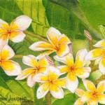 """""""Plumeria 1"""" by jonathanwangsgard"""
