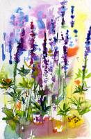 Wild Lupines Watercolor and Ink by Ginette