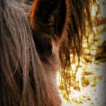 """Horse-2"" by photosbybritney"