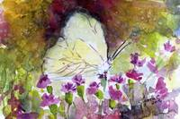 Southern White Butterfly Watercolor by Ginette