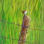 """Pasture Wren"" by SergeantFirstClass"