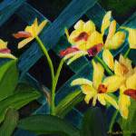 """Beautiful Orchids"" by mariawilliams"