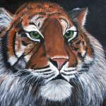 """Tiger"" by cliftondesigns"