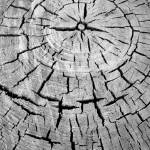 """cracks and growth rings"" by fotosky"
