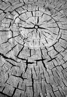 cracks and growth rings