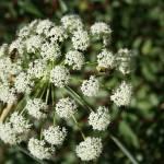 """Mountain Wild Flower"" by JewelsOfDenile"