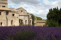 Lavender at Asylum of Saint-Paul-de-Mausole near S