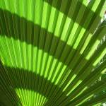 """Pattern - Tropical Greenery"" by Vince-McCall-Photography"