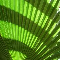 Pattern - Tropical Greenery Art Prints & Posters by Vince McCall