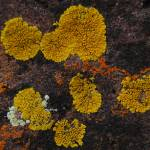 """Texture - Lichens"" by Vince-McCall-Photography"
